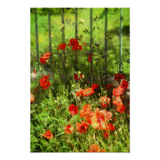 Poppies in a Backyard Poster