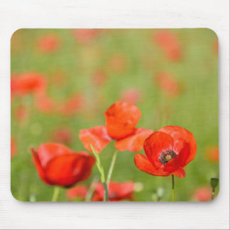 Poppies in a poppy field mousepad