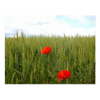 Poppies in a Wheat Field Postcard