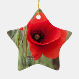 poppies in the garden christmas ornament