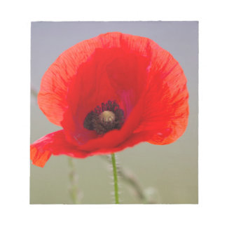poppies in the garden notepad
