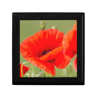 poppies in the garden small square gift box