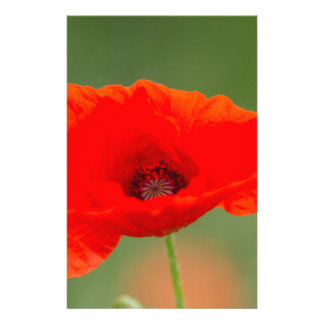 poppies in the garden stationery