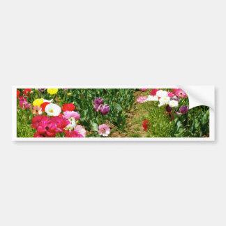 Poppies multicolours bumper sticker