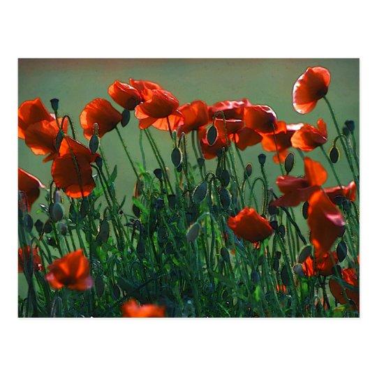 Poppies No. 3 | Postcard