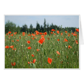 Poppies Notecard
