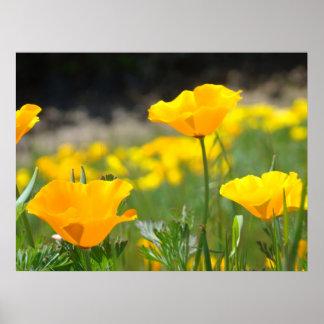 POPPIES Orange Poppy Flowers Art Prints Framed Art Print
