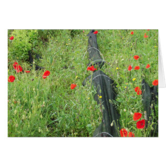 Poppies overgrowing on allotment stationery note card