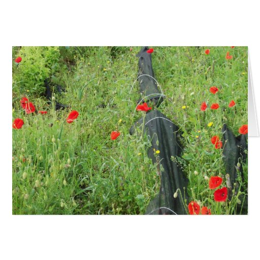 Poppies overgrowing on allotment greeting card