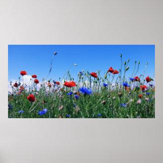 Poppies Plakatdrucke
