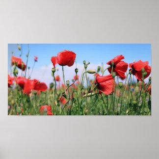 Poppies Plakate