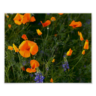 Poppies Poppy Office Personalize Destiny Destiny'S Poster