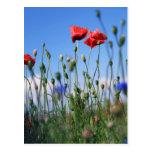 Poppies Postkarten