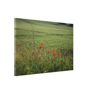 Poppies Stretched Canvas Print