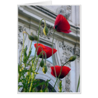 Poppies, Villa Borghese, Rome Card