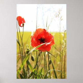 Poppy 2012 10 print