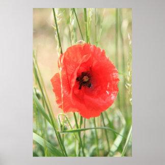 Poppy 2012 11 print