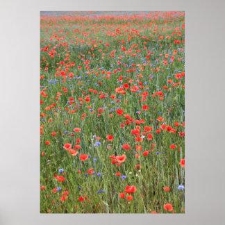 Poppy 2012 12 poster