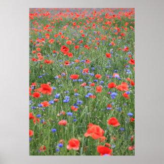 Poppy 2012 13 poster