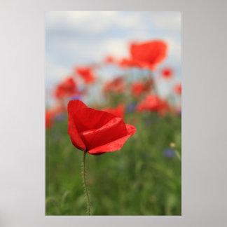 Poppy 2012 21 poster