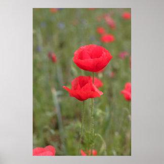 Poppy 2012 23 poster