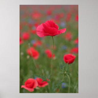 Poppy 2012 25 posters