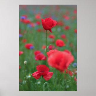 Poppy 2012 26 poster