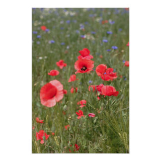 Poppy 2012 29 poster