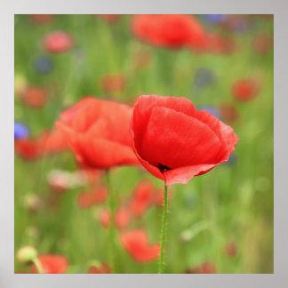 Poppy 2012 2 poster