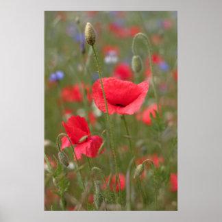 Poppy 2012 30 posters
