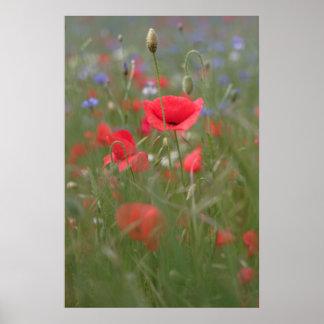 Poppy 2012 31 poster