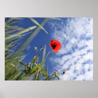 Poppy 2012 3 poster