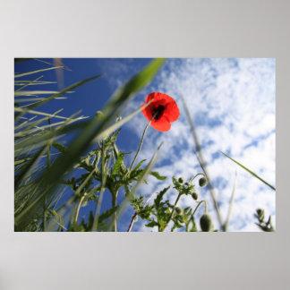 Poppy 2012 4 poster