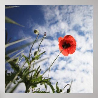 Poppy 2012 5 print