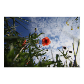 Poppy 2012 6 posters