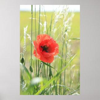 Poppy 2012 8 print