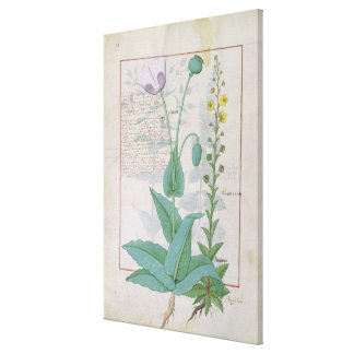 Poppy and Figwort Canvas Print