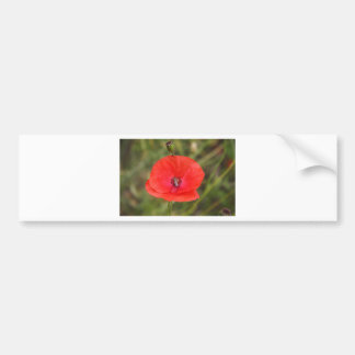 poppy bumper sticker