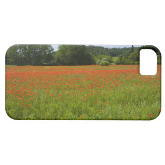 Poppy field, Chiusi, Italy Barely There iPhone 5 Case