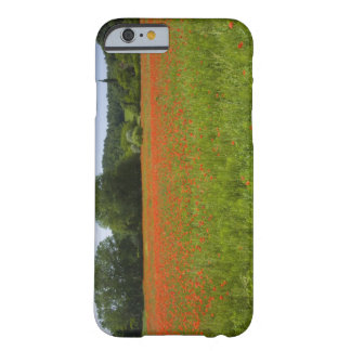 Poppy field, Chiusi, Italy Barely There iPhone 6 Case