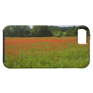 Poppy field, Chiusi, Italy Case For The iPhone 5
