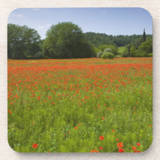 Poppy field, Chiusi, Italy Drink Coaster