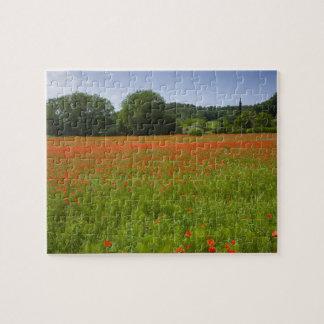 Poppy field, Chiusi, Italy Jigsaw Puzzle
