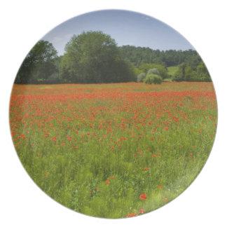 Poppy field, Chiusi, Italy Plate