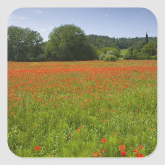 Poppy field, Chiusi, Italy Square Sticker