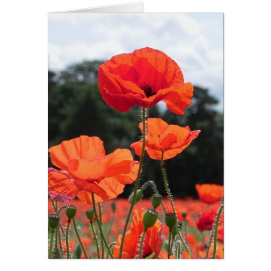 Poppy Field in Shades of Red Card