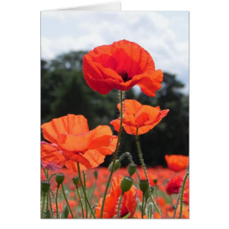 Poppy Field in Shades of Red Greeting Card