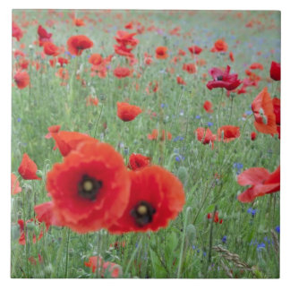 Poppy field in Vernon. Tile