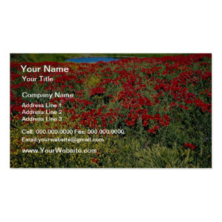 Poppy field, Middle Atlas, Morocco  flowers Pack Of Standard Business Cards