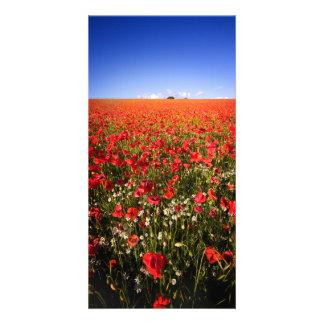Poppy field photo cards